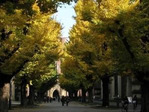 圧縮:※03.東京大学〔本郷〕構内